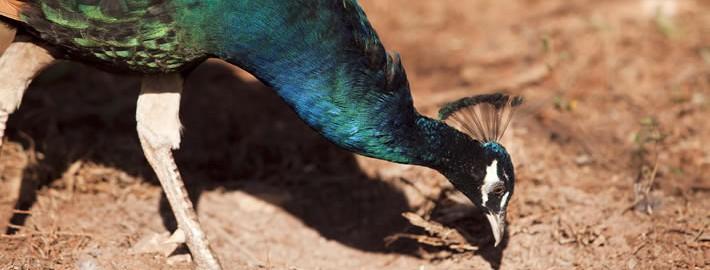 aves-exoticas-blog